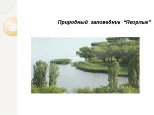 """Природный заповедник """"Ягорлык"""""""