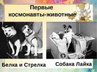 Первые космонавты-животные Белка и Стрелка Собака Лайка