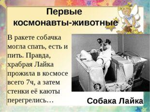 Первые космонавты-животные Собака Лайка В ракете собачка могла спать, есть и