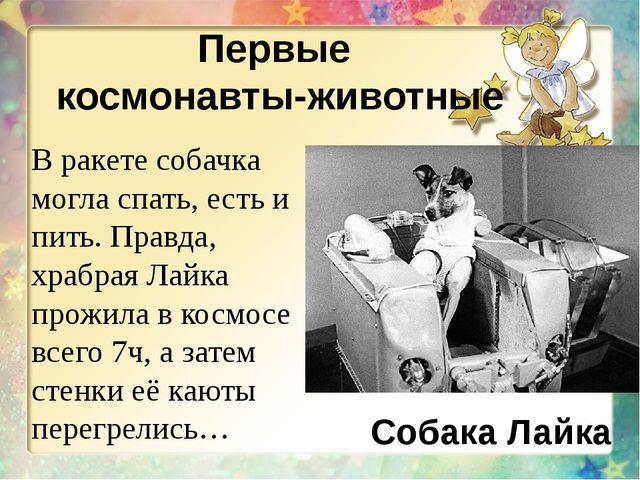 Первые космонавты-животные Собака Лайка В ракете собачка могла спать, есть и...
