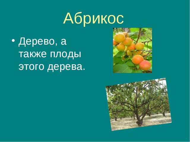 Абрикос Дерево, а также плоды этого дерева.