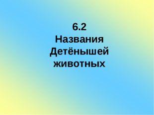 6.2 Названия Детёнышей животных