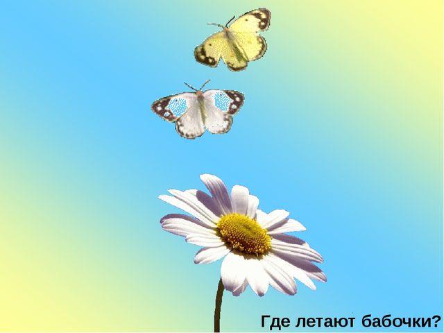 Где летают бабочки?