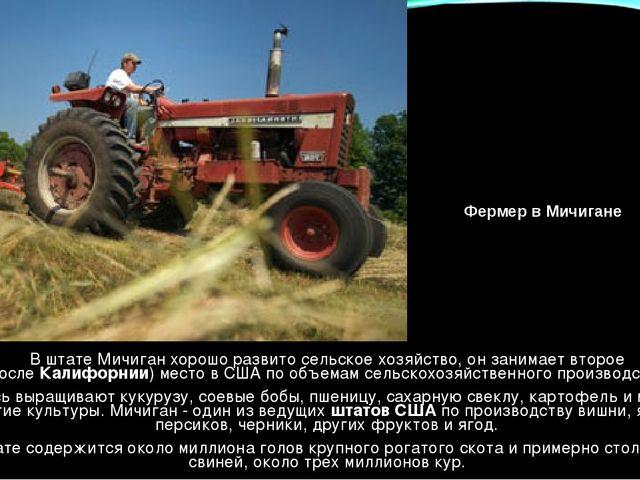 В штате Мичиган хорошо развито сельское хозяйство, он занимает второе (после...