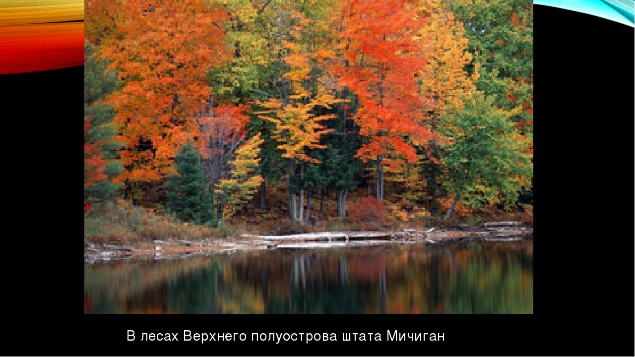 В лесах Верхнего полуострова штата Мичиган