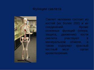Функции скелета Скелет человека состоит из костей (их более 200) и их соедин