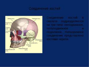 Соединение костей Соединение костей в скелете подразделяется на три типа: не