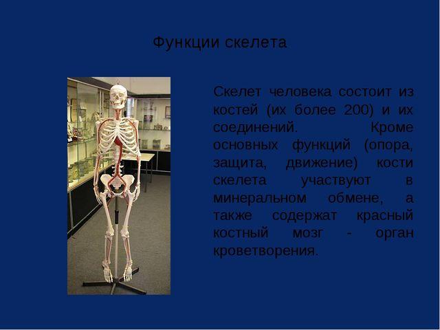 Функции скелета Скелет человека состоит из костей (их более 200) и их соедин...