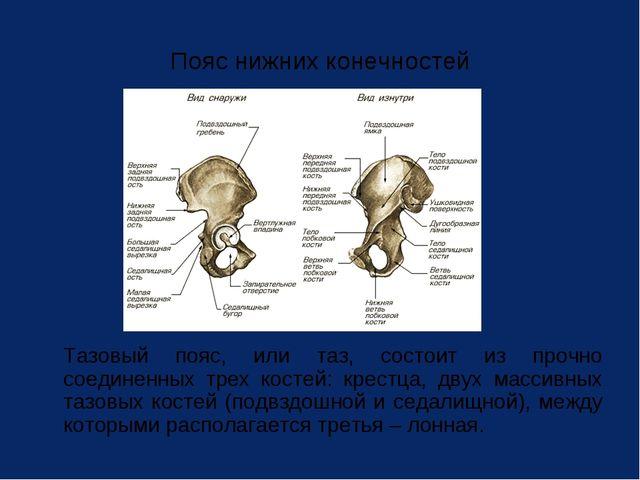 Пояс нижних конечностей Тазовый пояс, или таз, состоит из прочно соединенных...
