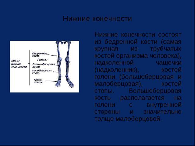 Нижние конечности Нижние конечности состоят из бедренной кости (самая крупна...