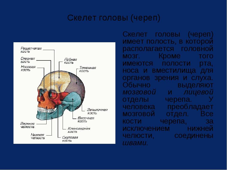 Скелет головы (череп) Скелет головы (череп) имеет полость, в которой распола...