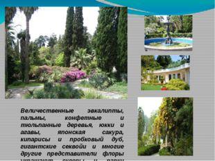 Величественные эвкалипты, пальмы, конфетные и тюльпанные деревья, юкки и агав