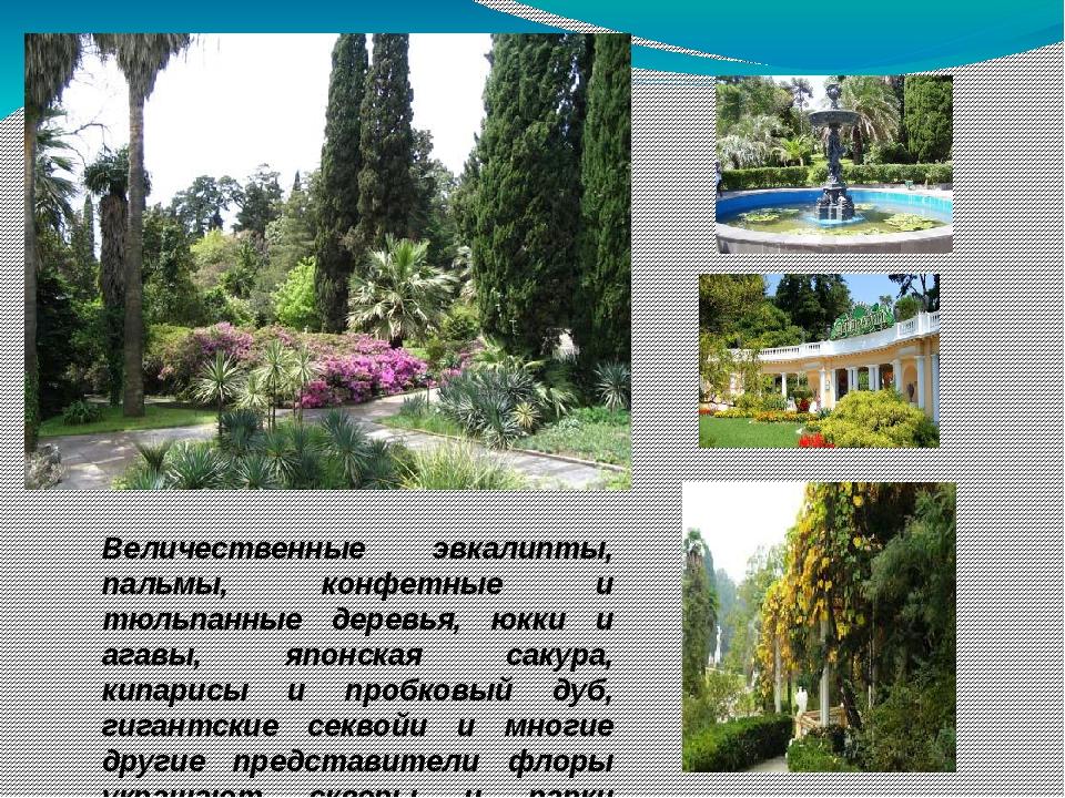 Величественные эвкалипты, пальмы, конфетные и тюльпанные деревья, юкки и агав...