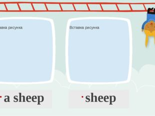 a sheep sheep