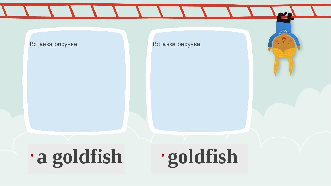 a goldfish goldfish