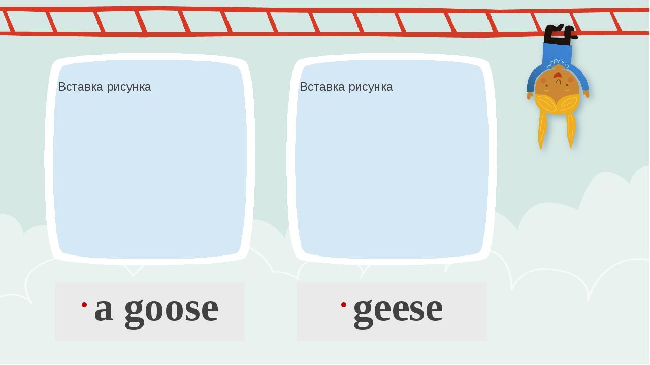 a goose geese