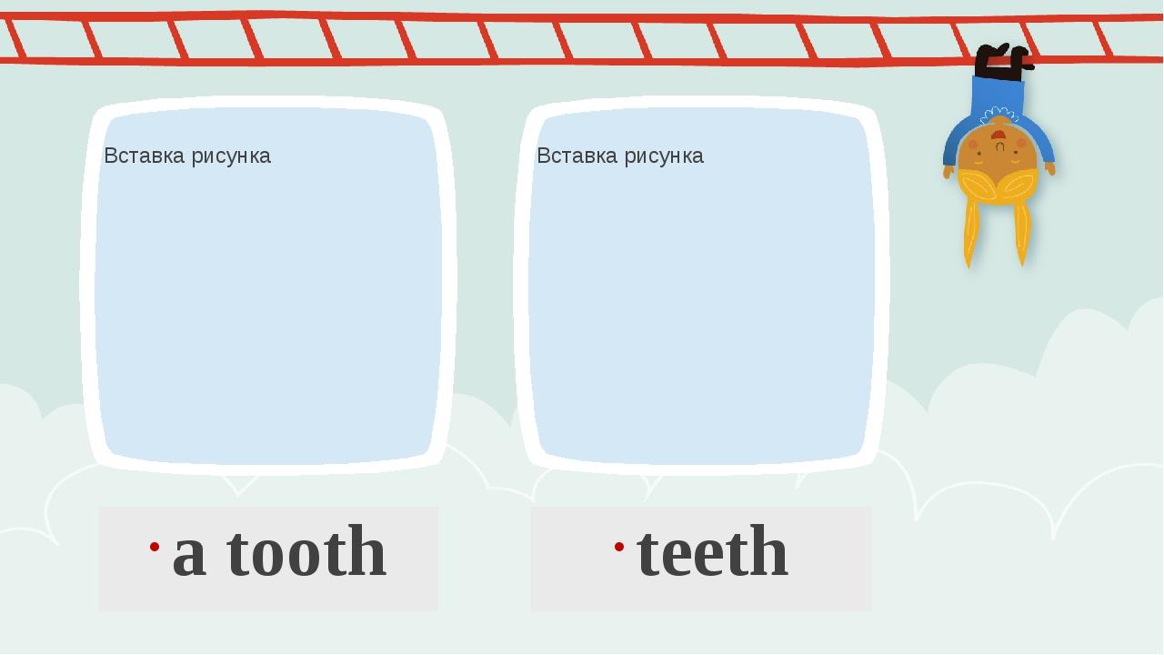 a tooth teeth