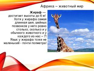 Жираф — достигает высоты до 6 м! Хотя у жирафа самая длинная шея, шейных позв