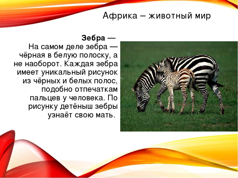 Зебра — На самом деле зебра — чёрная в белую полоску, а не наоборот. Каждая з...