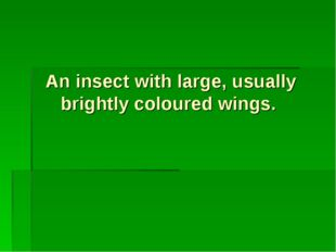 An insect with large, usually brightly coloured wings.