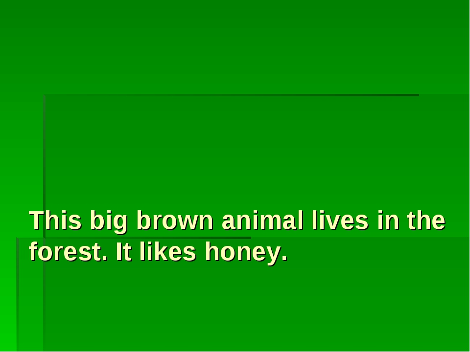 This big brown animal lives in the forest. It likes honey.