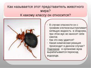 Как называется этот представитель животного мира? К какому классу он относит