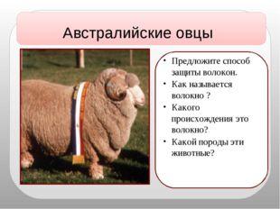 Австралийские овцы Предложите способ защиты волокон. Как называется волокно