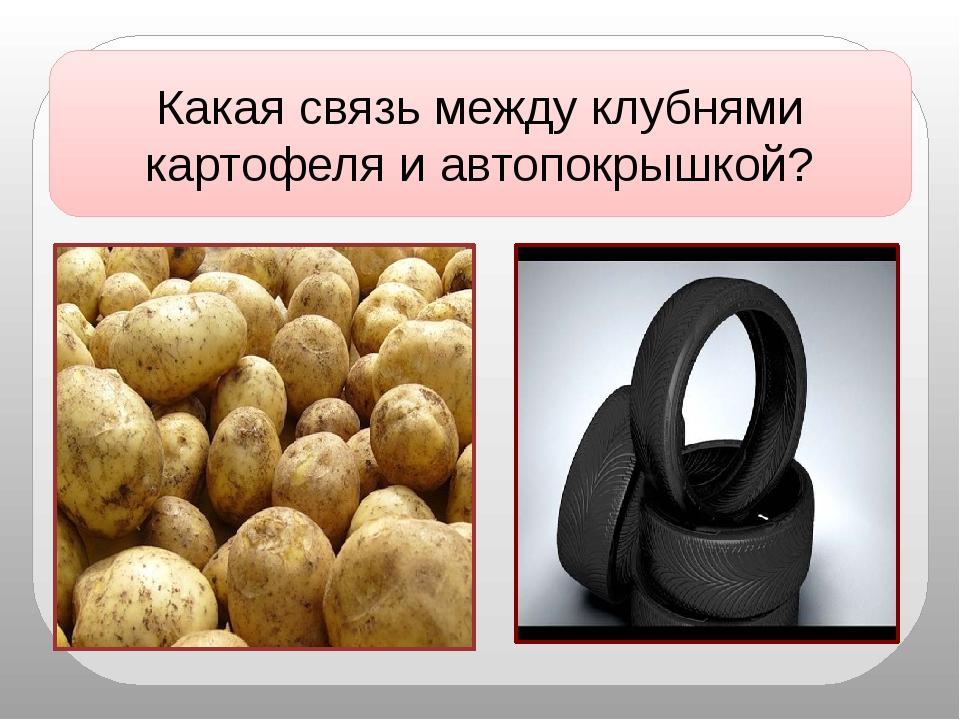Какая связь между клубнями картофеля и автопокрышкой?