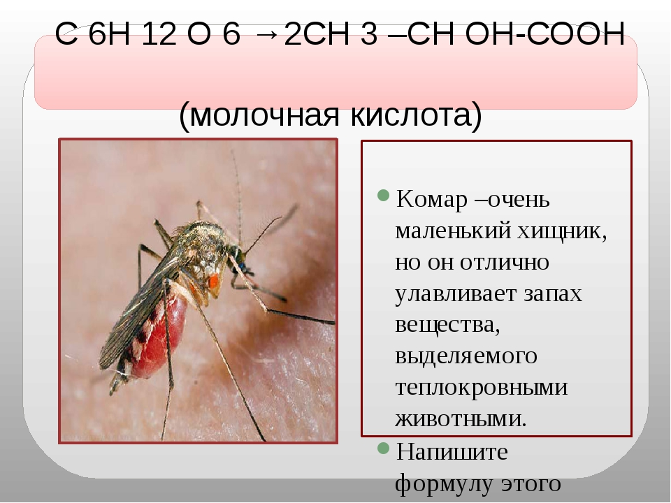 С 6Н 12 О 6 →2СН 3 –СН ОН-СООН (молочная кислота) Комар –очень маленький хищ...