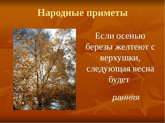 Народные приметы Если осенью березы желтеют с верхушки, следующая весна будет...