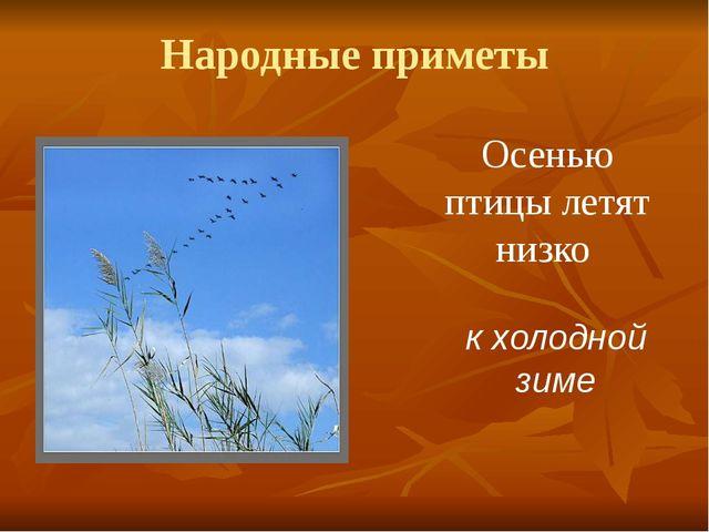 Народные приметы Осенью птицы летят низко к холодной зиме
