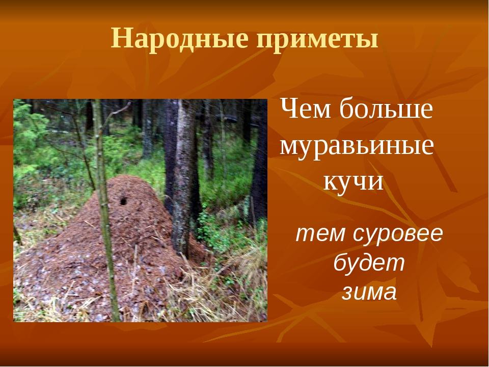 Народные приметы Чем больше муравьиные кучи тем суровее будет зима