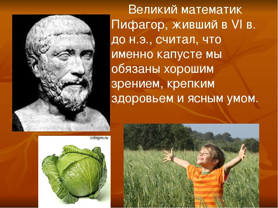 Великий математик Пифагор, живший в VI в. до н.э., считал, что именно капуст...