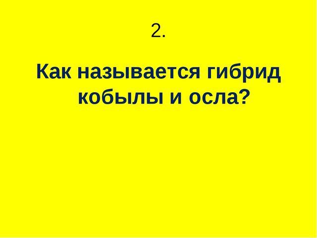 2. Как называется гибрид кобылы и осла?