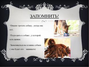 ЗАПОМНИТЬ! Опасно трогать собаку , когда она ест; Подходить к собаке , у кото
