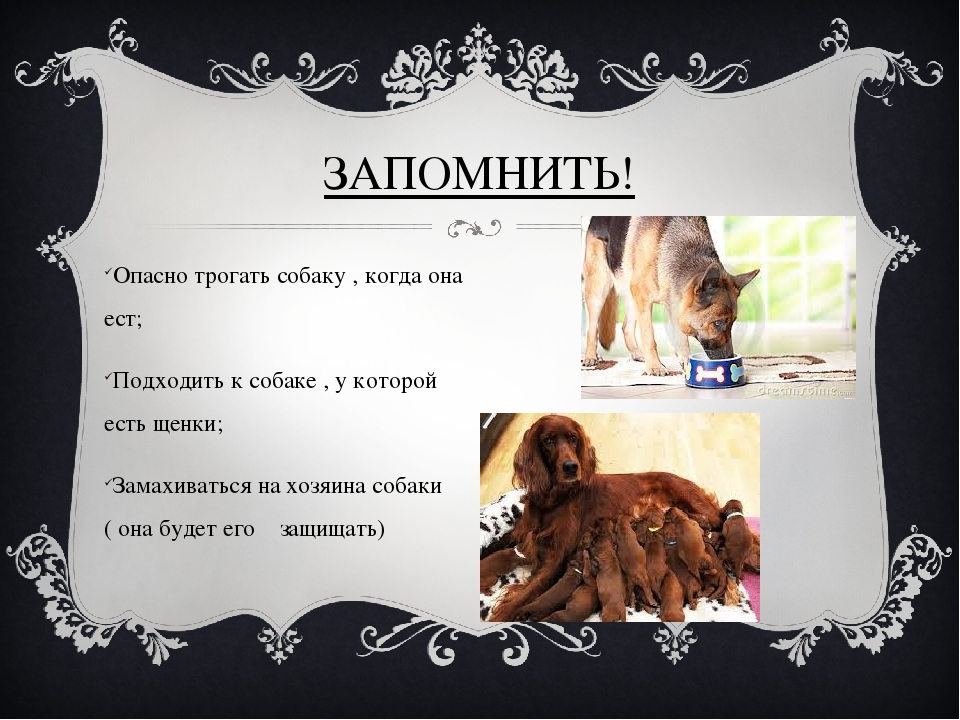 ЗАПОМНИТЬ! Опасно трогать собаку , когда она ест; Подходить к собаке , у кото...