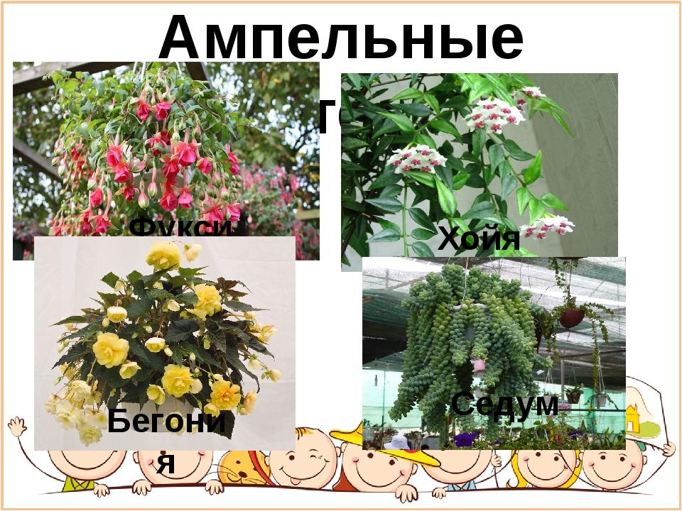 Ампельные растения Фуксия Хойя Бегония Седум