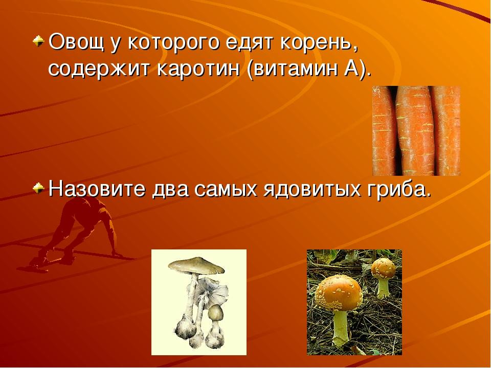 Овощ у которого едят корень, содержит каротин (витамин А). Назовите два самых...