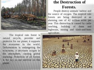 the Destruction of Forests. People destroy animals' habitat and the source