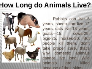 Rabbits can live 5 years, sheep can live 12 years, cats live 13 years, goats