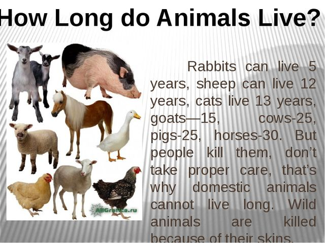 Rabbits can live 5 years, sheep can live 12 years, cats live 13 years, goats...