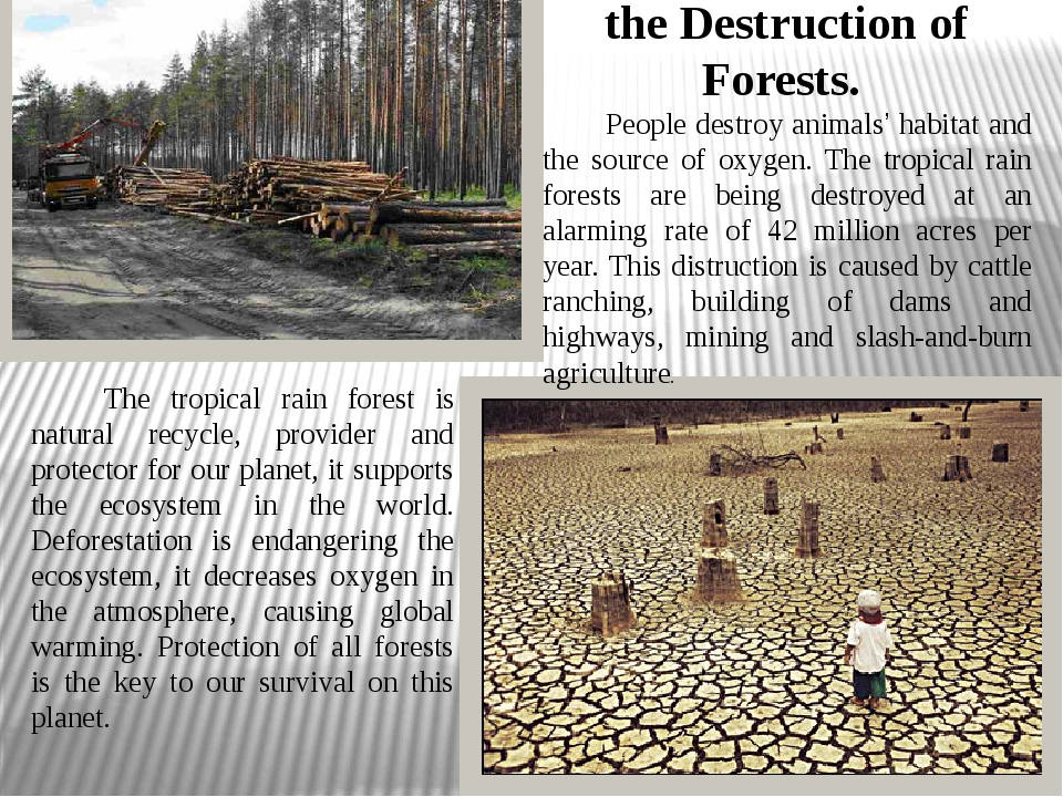 the Destruction of Forests. People destroy animals' habitat and the source...