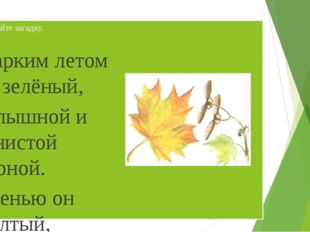 Отгадайте загадку. Жарким летом он зелёный, С пышной и тенистой кроной. Осень