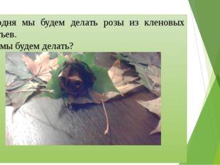 Сегодня мы будем делать розы из кленовых листьев. Что мы будем делать?