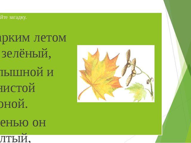 Отгадайте загадку. Жарким летом он зелёный, С пышной и тенистой кроной. Осень...