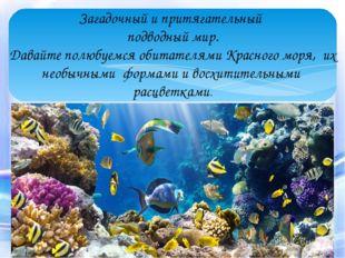 Загадочный и притягательный подводный мир. Давайте полюбуемся обитателями Кр