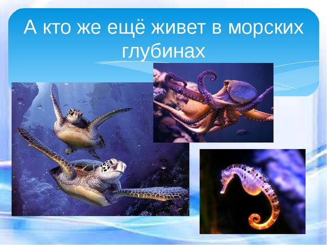 А кто же ещё живет в морских глубинах