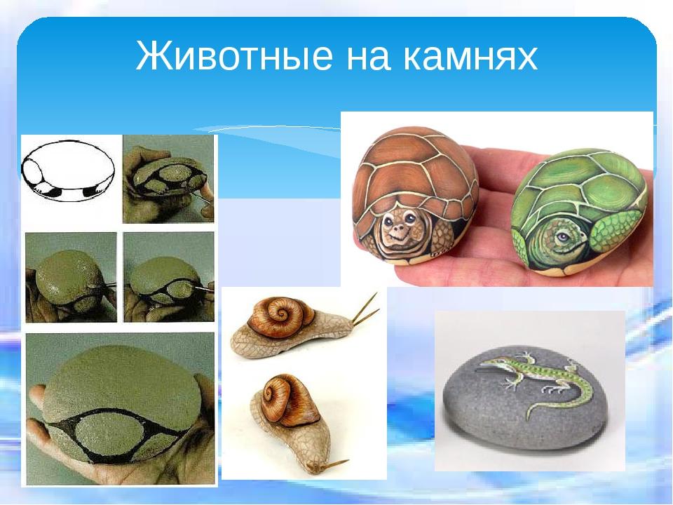 Животные на камнях