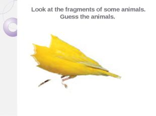 Look at the fragments of some animals. Guess the animals.