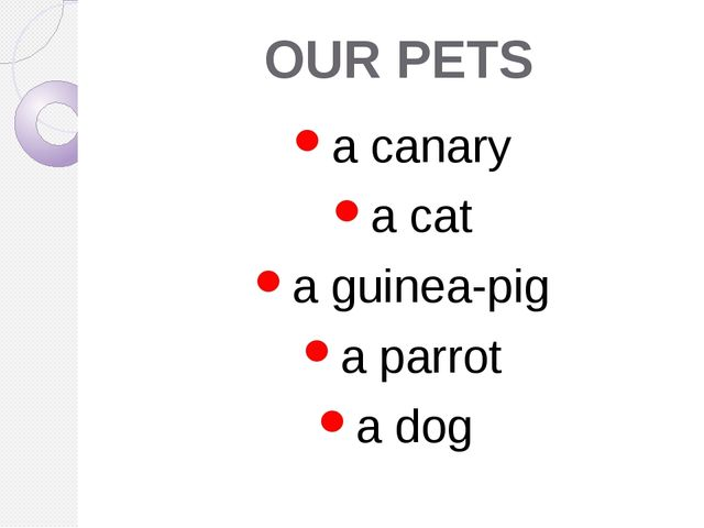 OUR PETS a canary a cat a guinea-pig a parrot a dog
